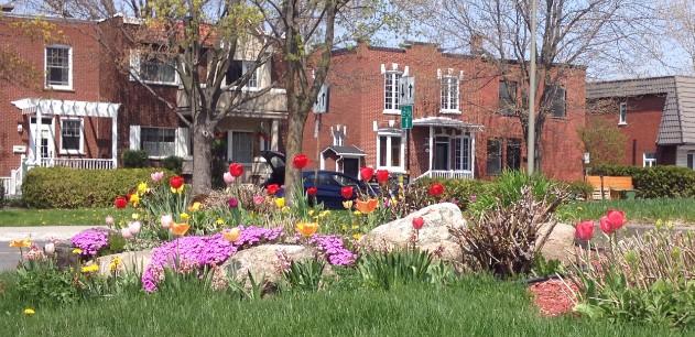 Photographie d'un parterre en fleur d'une rue locale